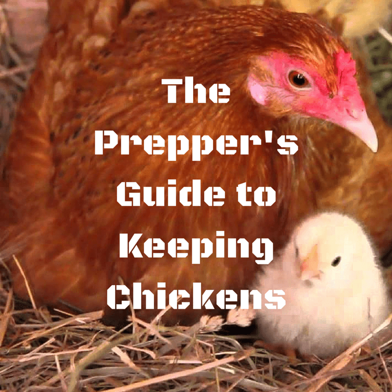 The Prepper's Guide to Keeping Chickens