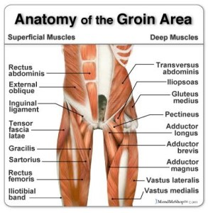 pain-in-the-groin-d
