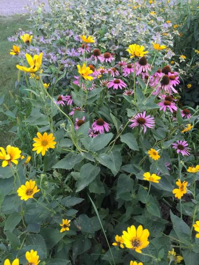 prairie flowers August