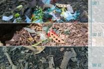 Degradation process of starch based bioplastics