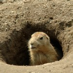 Soundtracking Sway: Our Groundhog Day Playlist