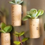 Today on the Boards: Tiny Succulent Cork Planters