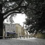 Under ceder trädet