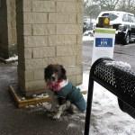 En hund med en halsduk väntar tålmodigt på sin ägare utanför en stormarknad