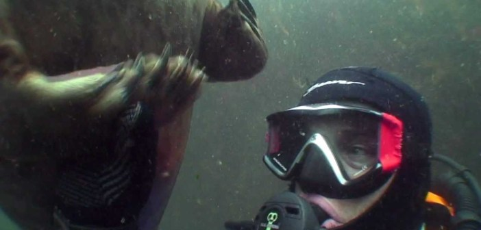 Diver and seal get real close, as in holding hands