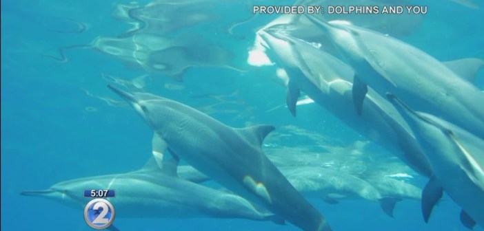 Federal regulators want to ban swimming with dolphins in Hawaii