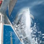 Delfiner leker med Spinnvill, og spinnvill leker med delfiner!