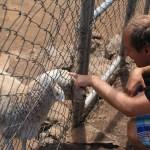 Gard digger ALLE dyr!