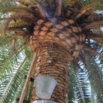Palmeoljeproduksjon
