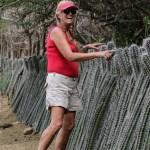 Sissel inspiserer kaktusgjerde-teknikken
