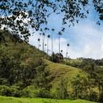 Cocora-dalen