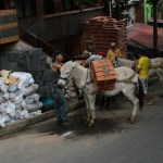 Esel brukes til og med i en storby som Medellin
