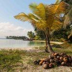 Sankersamfunnet har gjort klart til kokosnøttbåten