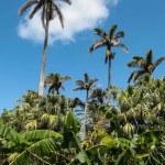 Frodig vegetasjon på Bermuda, blomster og palmer og barskog.