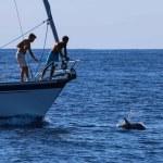 Alltid moro når delfinene kommer i baugen, store gutter blir til smågutter :)