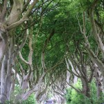 The Dark Hedges - et av mange filmsett i Game of Thrones