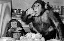 You could train a chimp to write a dad blog