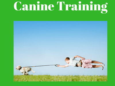 canine training