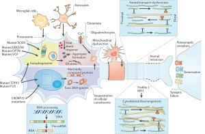 nature_review_neuroscience_article-4
