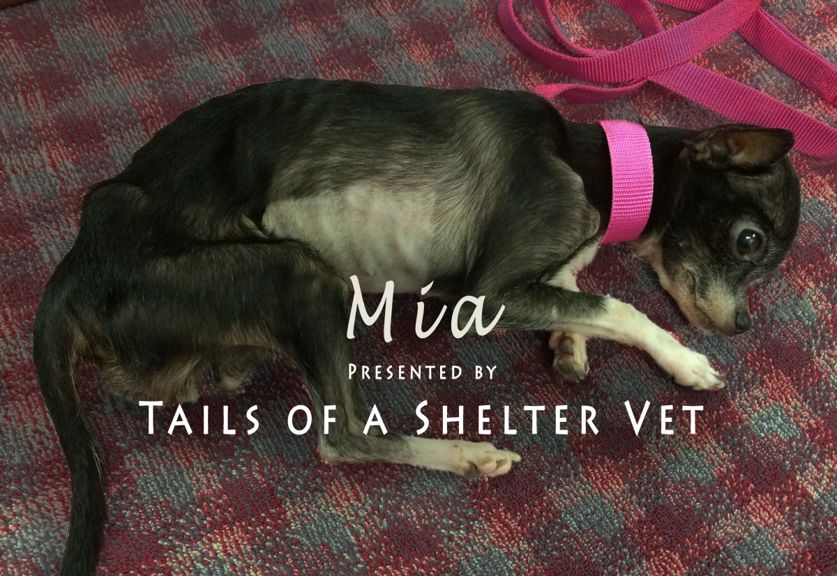 Mia - Vet Suspects Animal Neglect, Officers Investigate Dying Dog