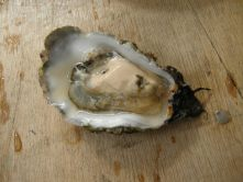 Oester