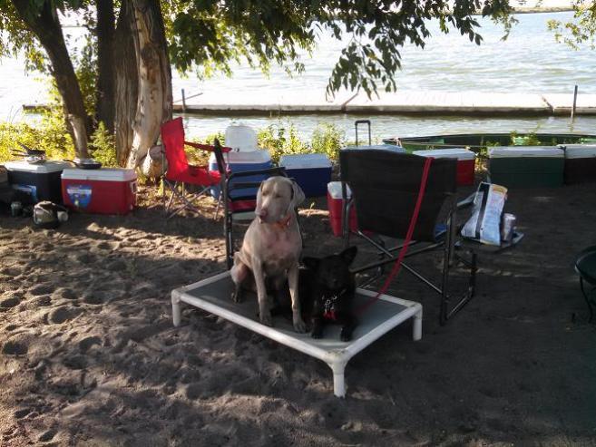 Dog Training at the Lake
