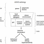 Fig. 1. Schematic representation of prevention levels in ADHD.  Click to enlarge.