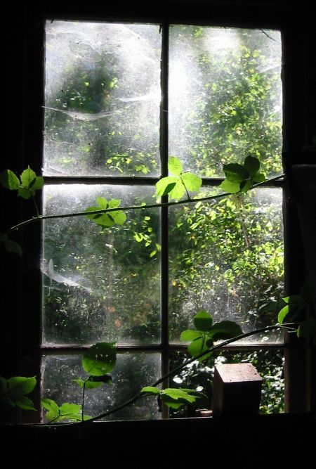 barn window & blackberry vine