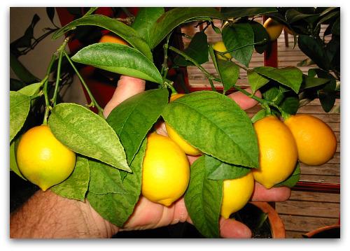 blog_got_lemons