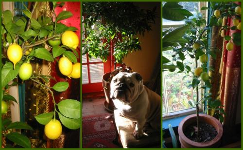 blog_lemon_collage