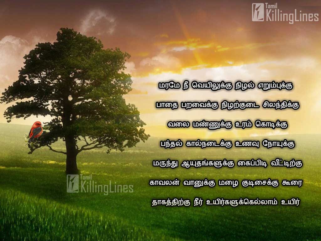 Love Failure Quotes In Tamil Wallpapers Tamil Quotes And Kavithai About Trees Marangal