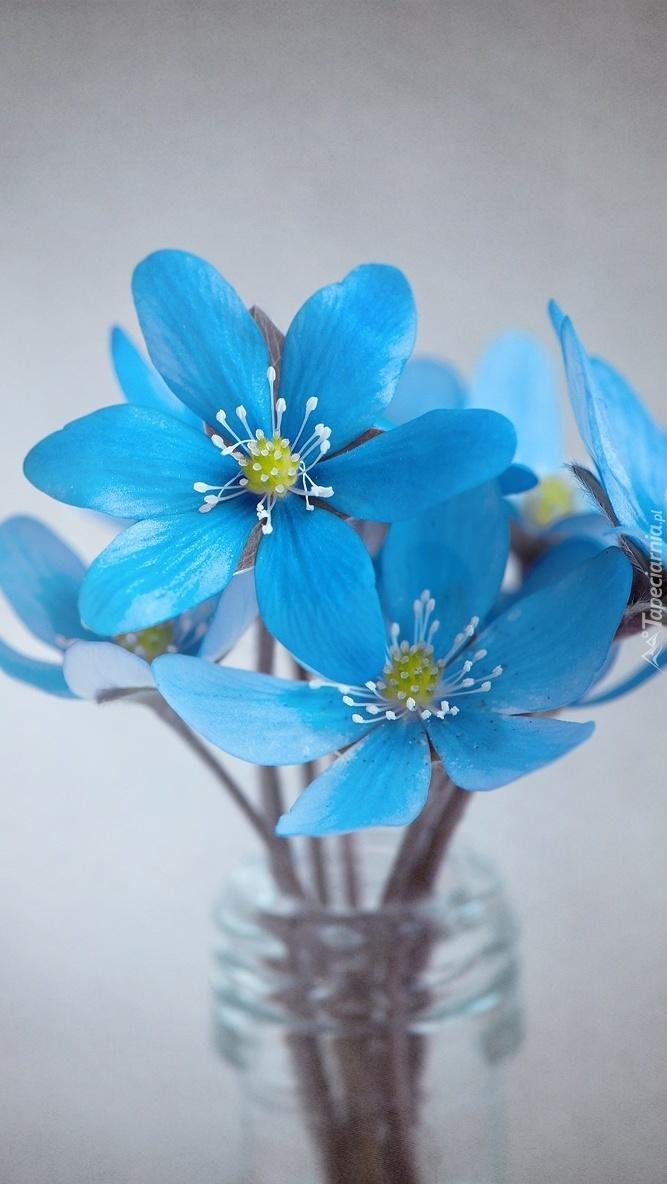 Pinterest Wallpapers Fall Niebieskie Kwiaty W Wazonie Tapeta Na Telefon