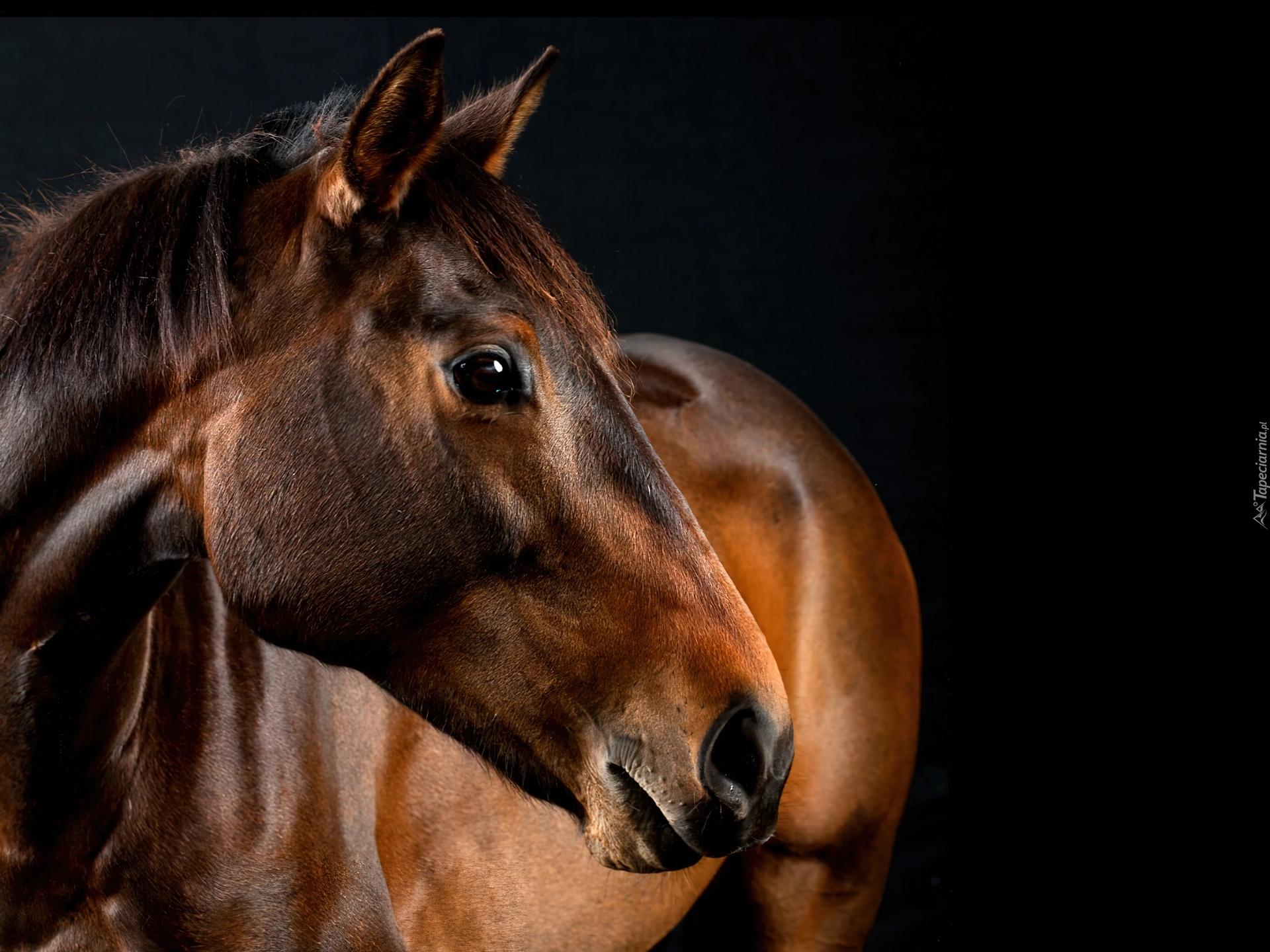 Beautiful Girl Face Hd Desktop Wallpaper Brązowy Koń