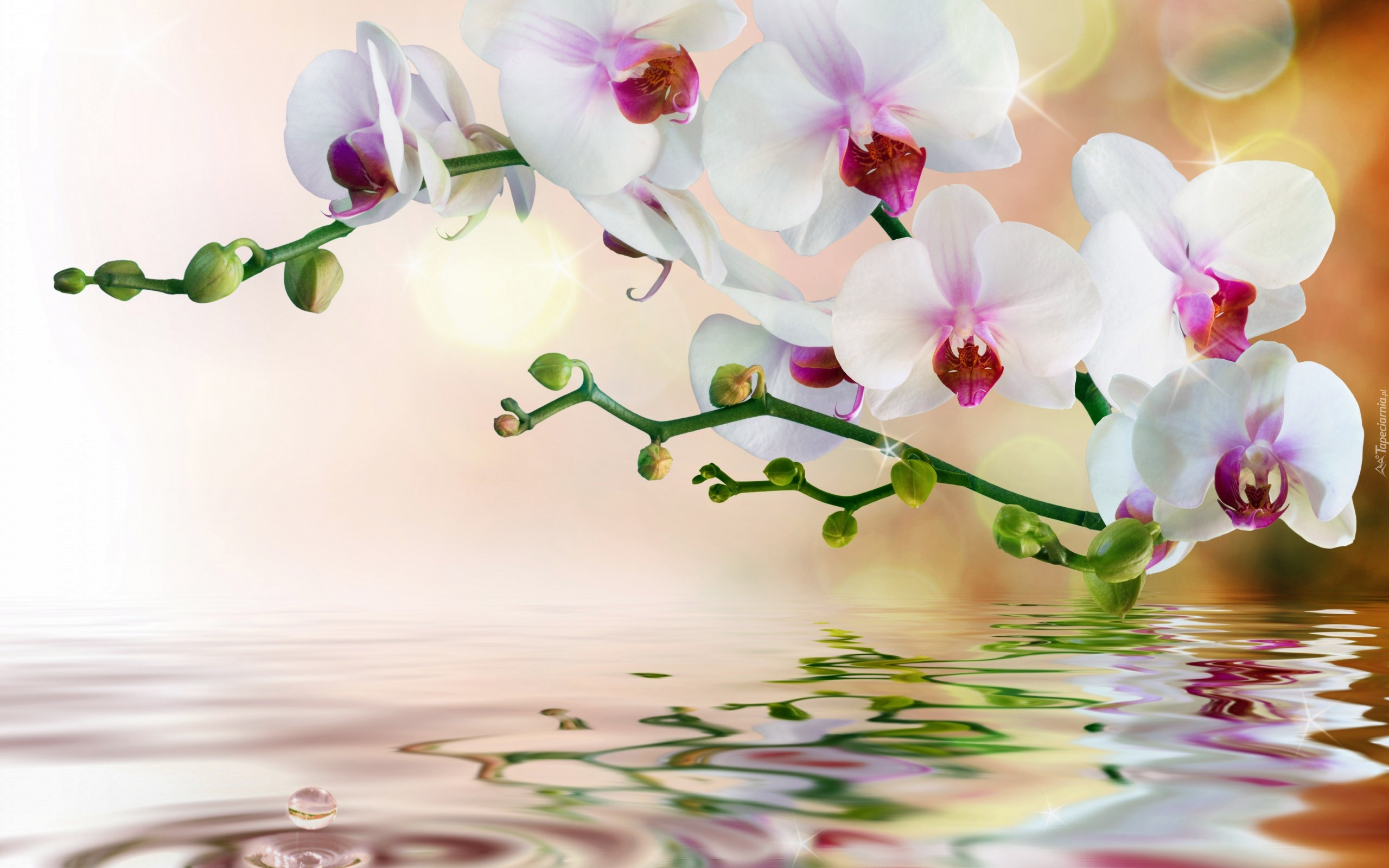 3d Orchid Wallpaper Orchidea Woda Odbicie