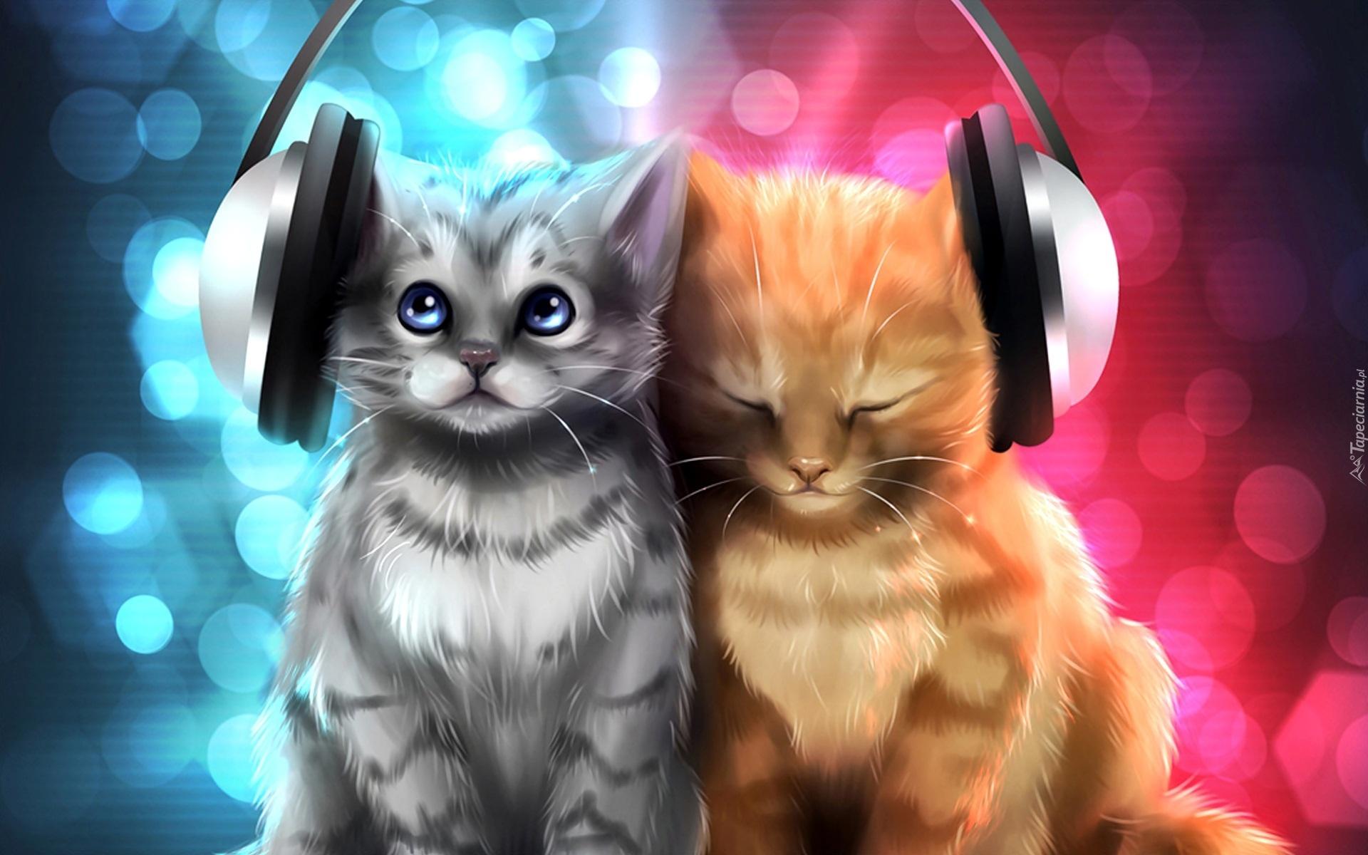 Cute Kitty Cat Wallpapers Dwa Kotki Słuchawki Śmieszne