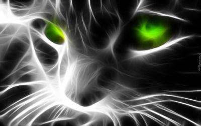 Kot, 3D