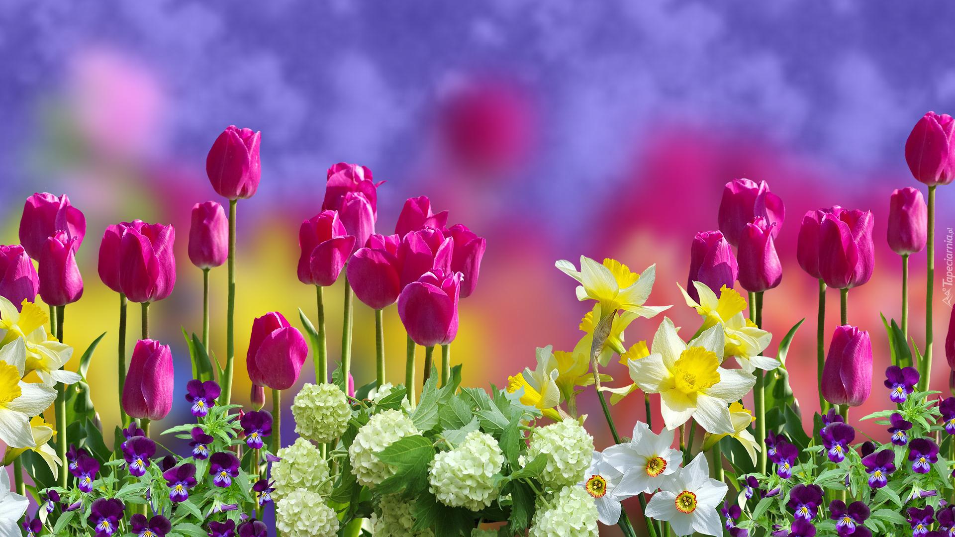Kolorowe Wiosenne Kwiatki