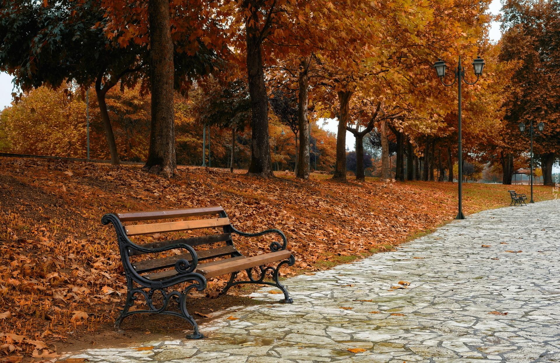 Smoky Mountains Fall Wallpaper Ławeczka Przy Alejce W Jesiennym Parku