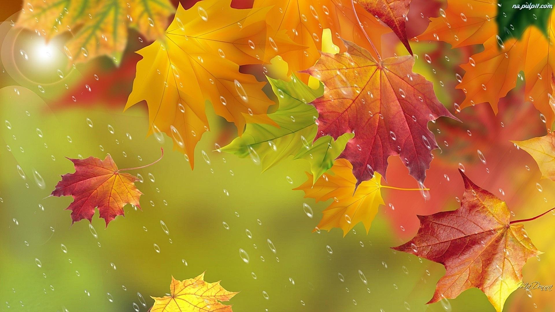 Fall Autumn Hd Wallpaper 1920x1080 Art Deszcz Liście Jesień Na Pulpit