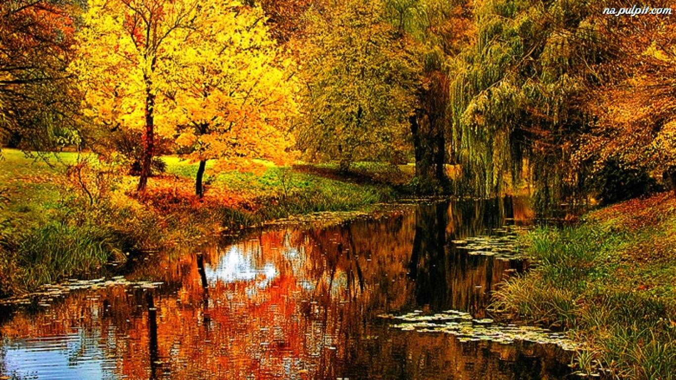 1920x1200 Fall Wallpaper Rzeka Jesień Las Na Pulpit
