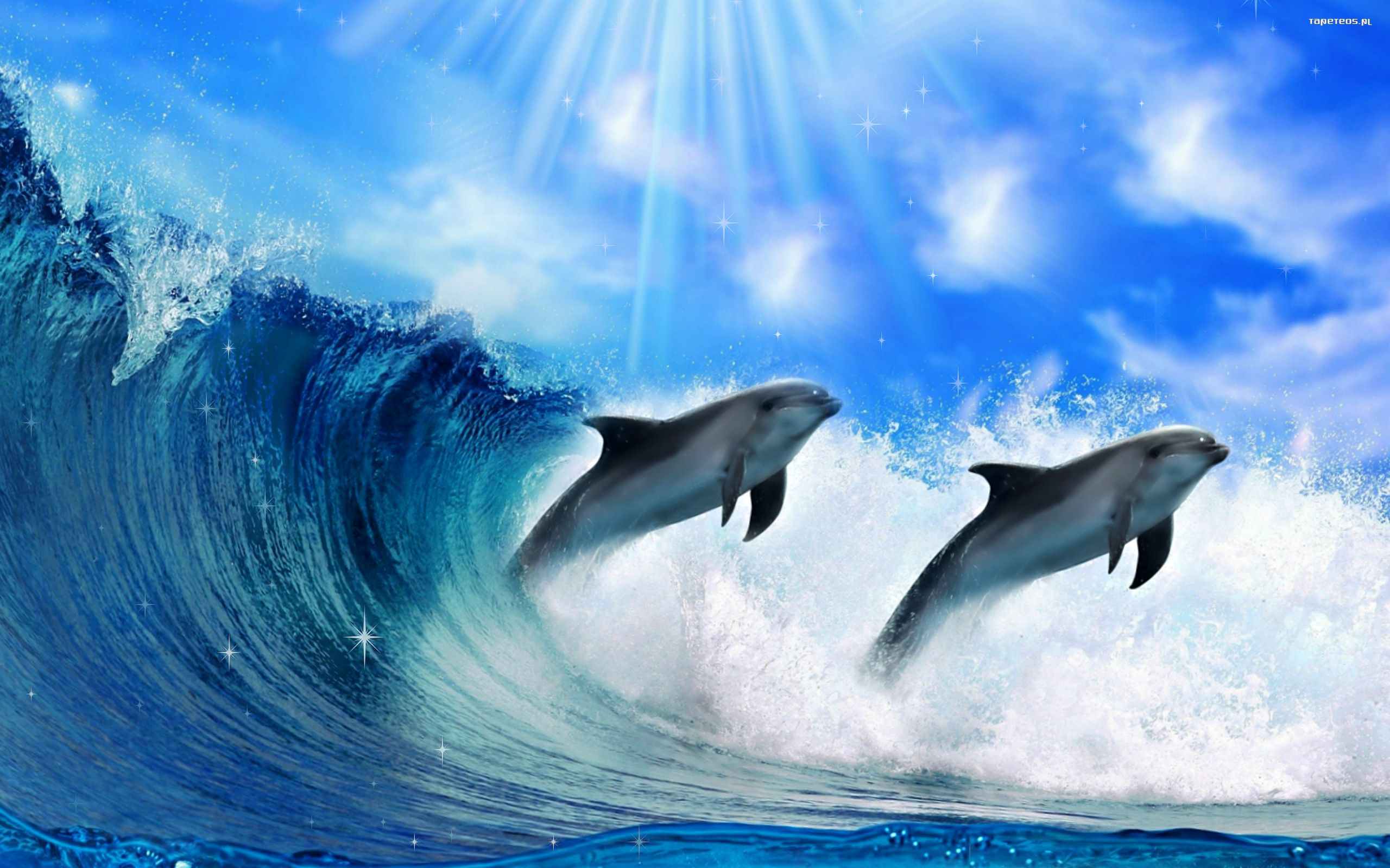3d Dolphin Wallpaper For Windows 7 Delfin 2560x1600 004 Fala Tapety Na Pulpit
