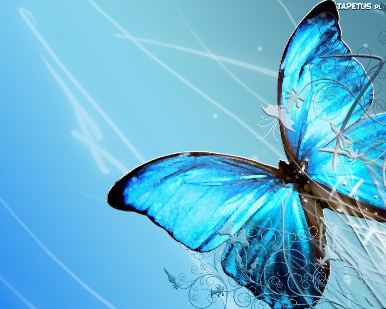 Wallpaper Mobil Sport Hd Niebieski Motyl