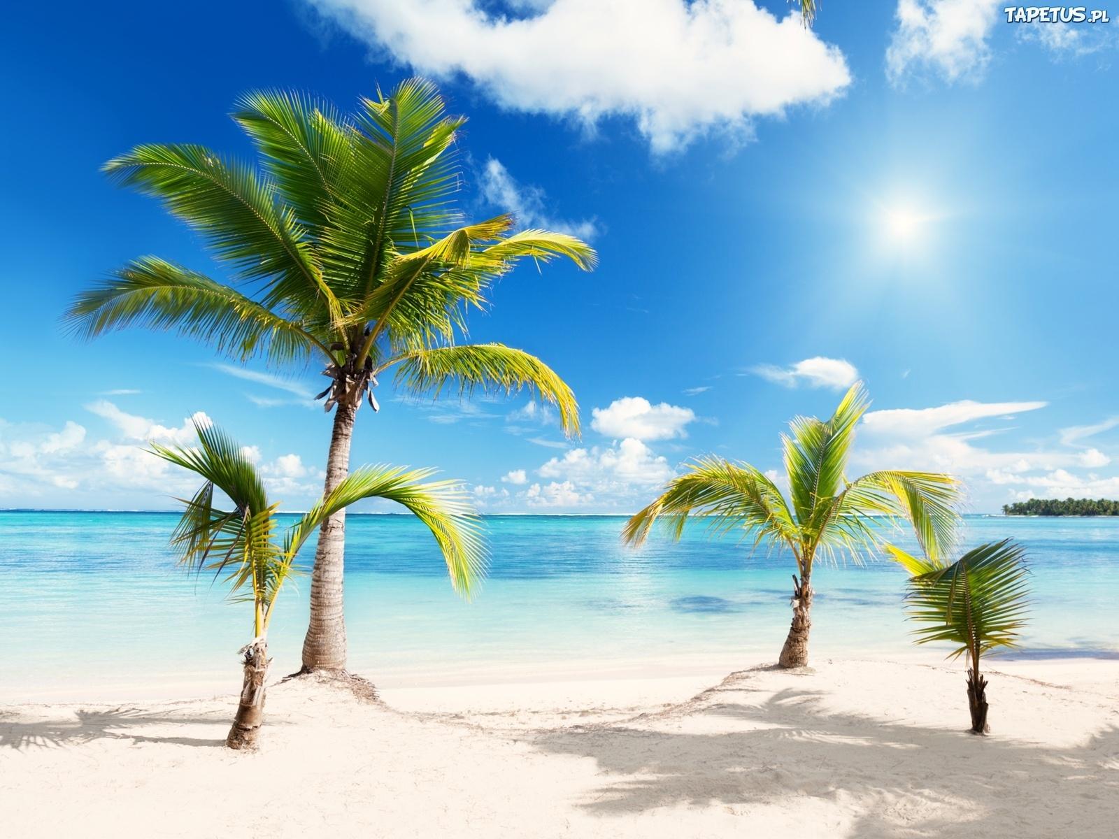 3d Wallpaper Avatar Palmy Plaża Biały Piasek