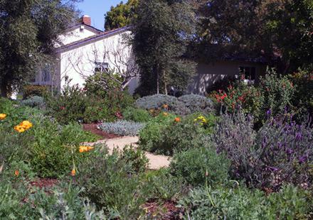 Sustainable, Low Maintenance Garden \ Landscape Design in - sustainable garden design