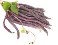 cosse violette