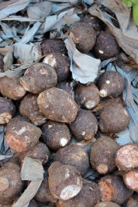 Yams. These and other starches like potatoes and cassava are quite prominent are Jamaican cuisine.