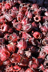 Sorrel flowers.  They are generally used to make tea and are a traditional rememdy to clear up respiratory inflammation.