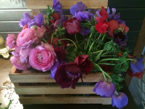 Some very pretty posies. Paula said what farm they were from, but I forgot the name.