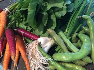 My purchases: Carrots, Garlic Chives, Green Garlic, Escarole, Fava Beans