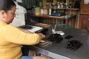 One of the ladies grading and sorting the vanilla beans.
